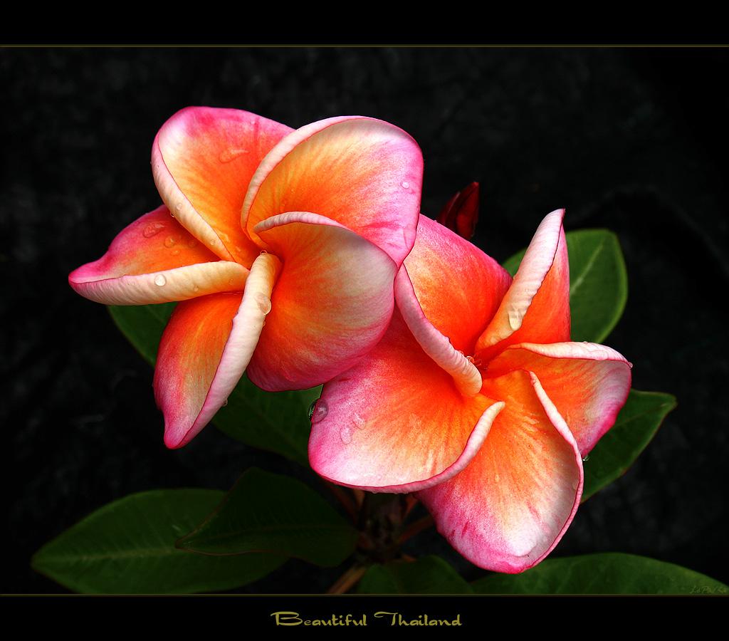 pretty exotic flowers #12