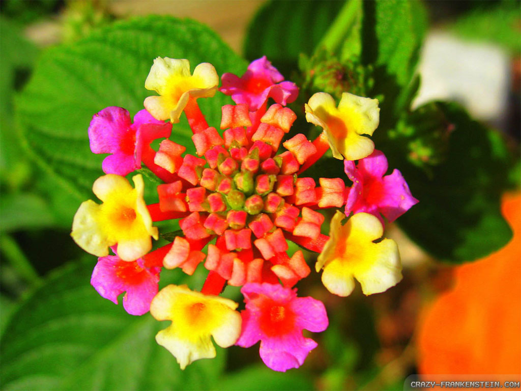 Beautiful Exotic Flower Pictures.