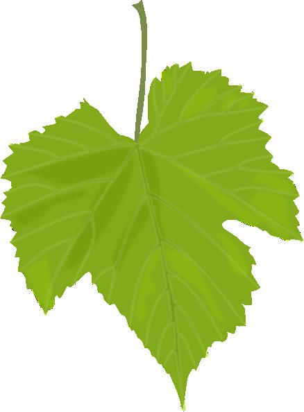 Grape Vine Leaves Clip Art.
