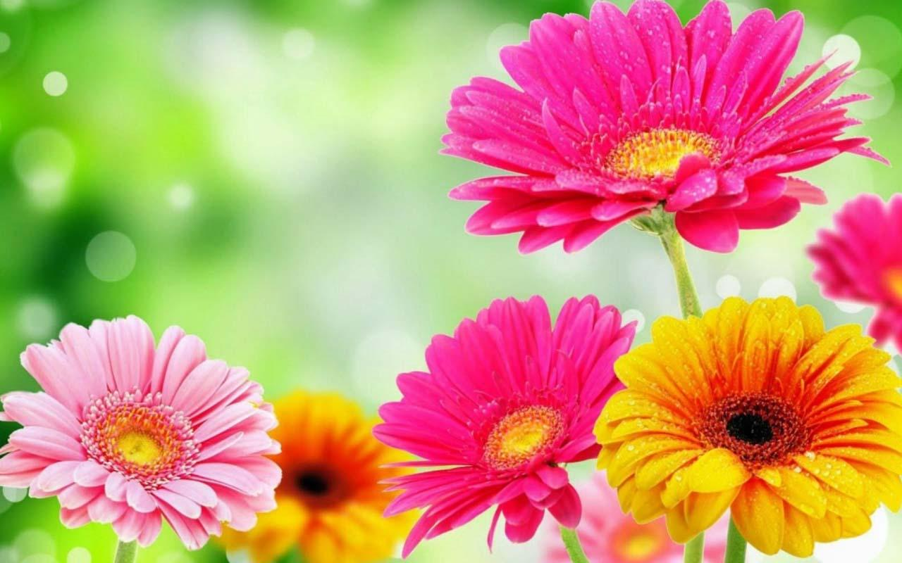 A List of Springtime Flowers.