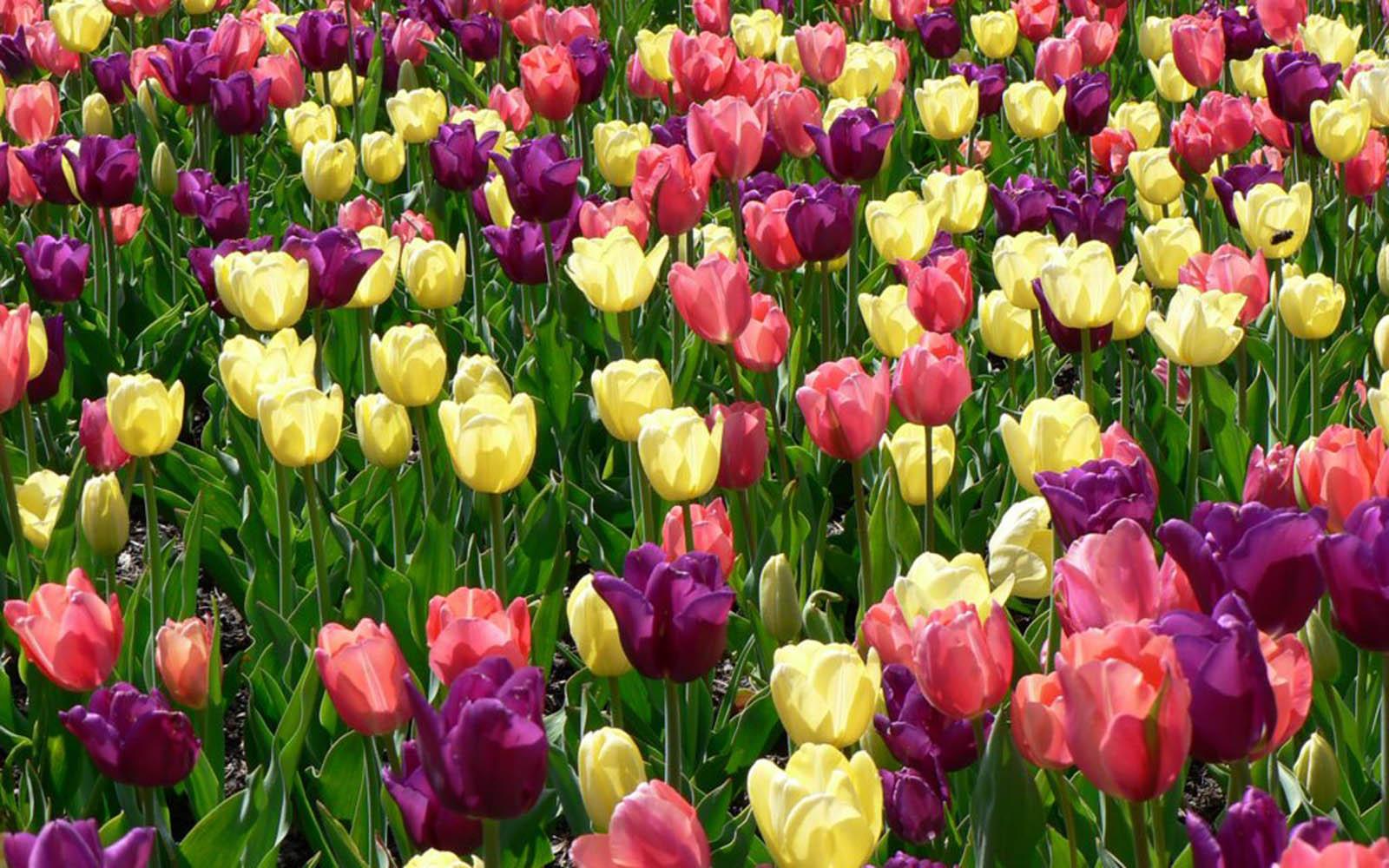 Springtime Flowers Wallpaper.