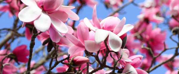 Top Places to View Springtime Flowers in Victoria.