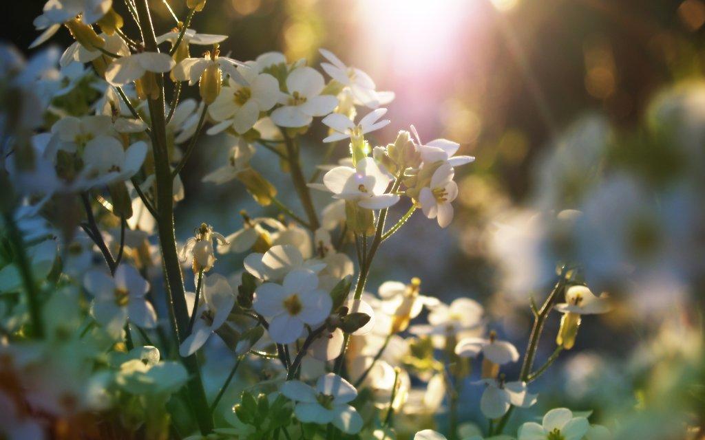 Springtime flowers by infinityloop on DeviantArt.
