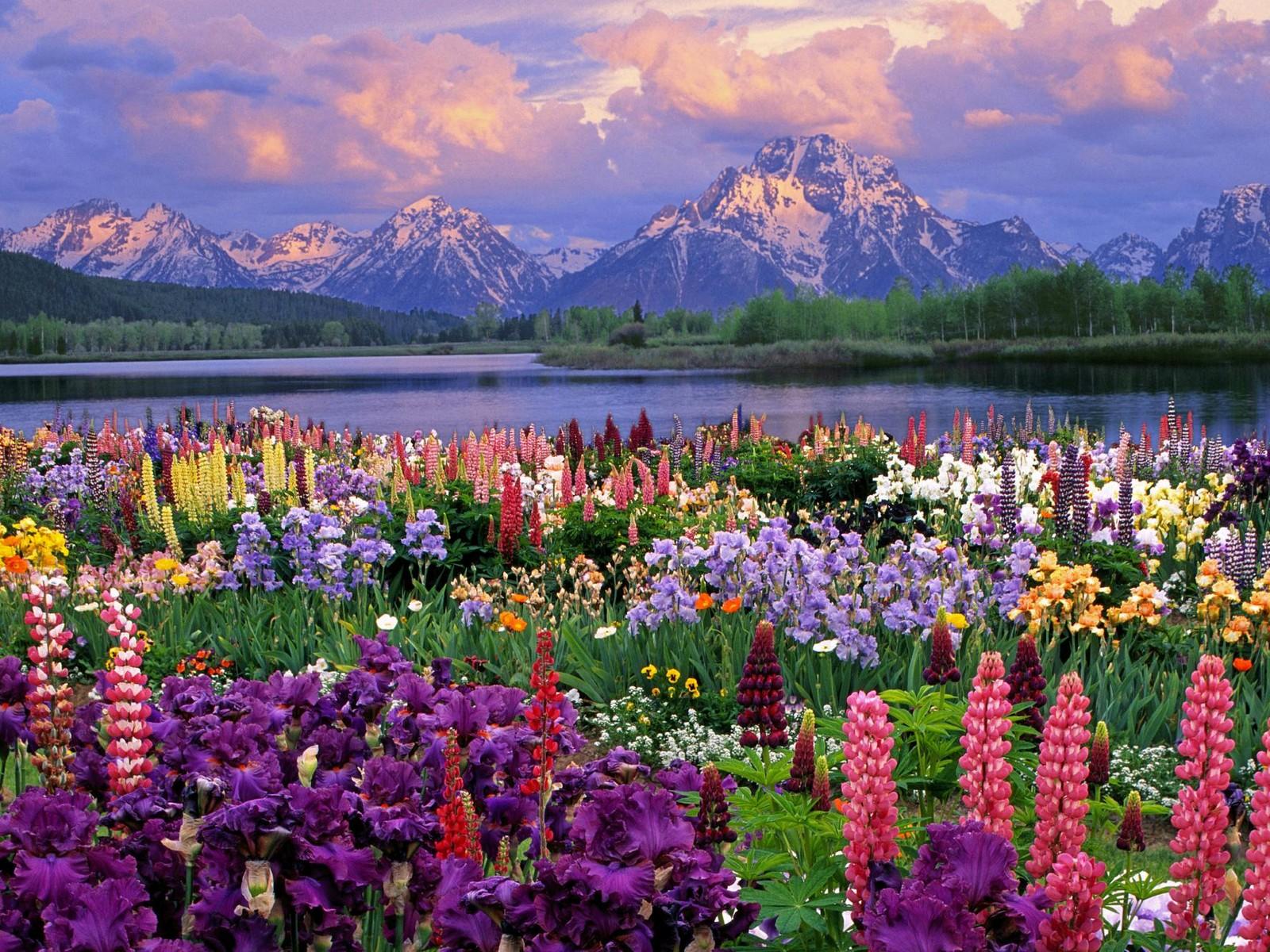 Springtime Pics Flowers.