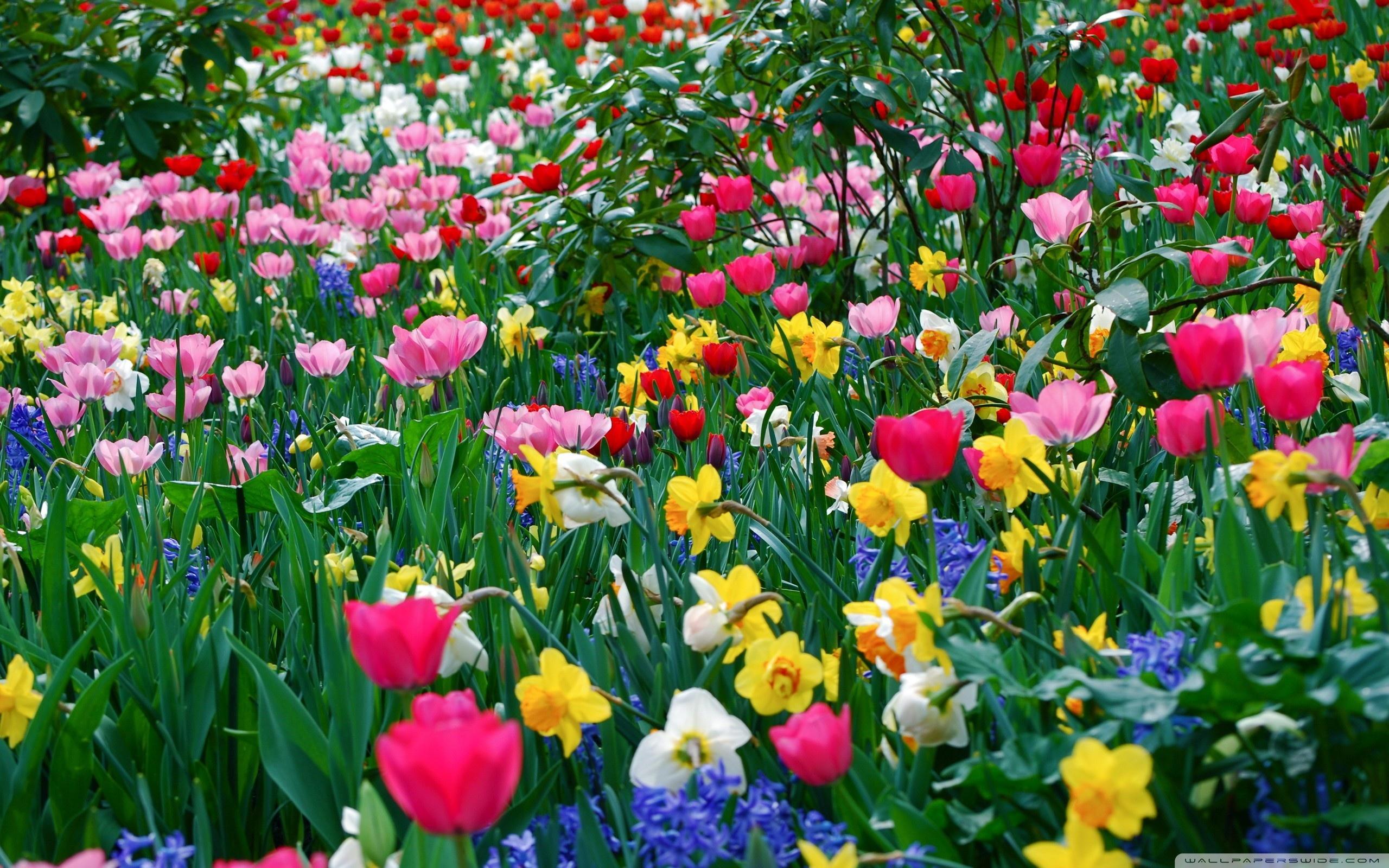 Spring Flowers wallpaper.
