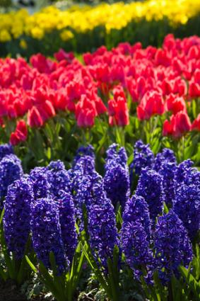 A List of Spring Flowers.
