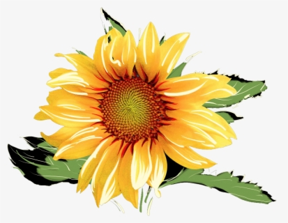 Free Sunflowers Clip Art with No Background.