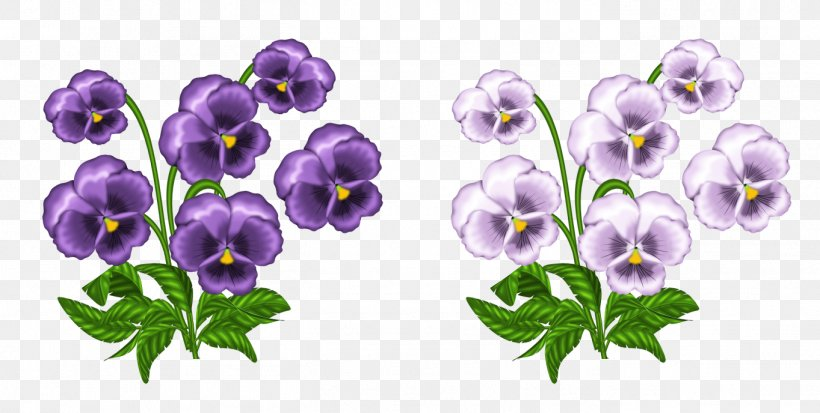 Pansy Definition Meaning Word Hybrid, PNG, 1363x688px, Sweet.