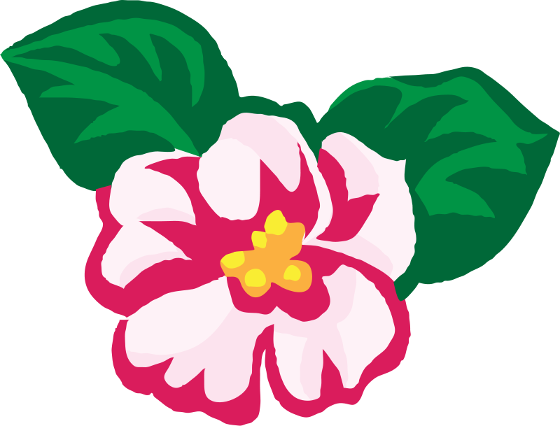 Flower Clipart Picturespng 2679 Kb African Violets free image.