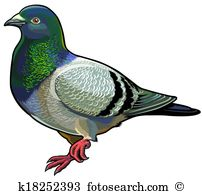 Pigeon Clip Art Illustrations. 5,586 pigeon clipart EPS vector.