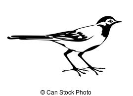 Wagtail Stock Photo Images. 1,060 Wagtail royalty free images and.