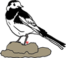 Bird Clipart Pied Wagtail, Echo's Free Bird Clipart,British Bird.
