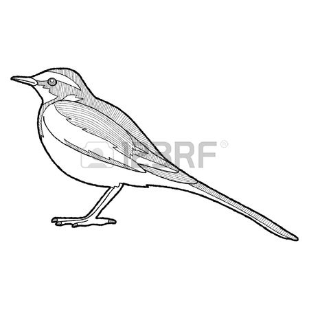 68 Wagtail Stock Vector Illustration And Royalty Free Wagtail Clipart.