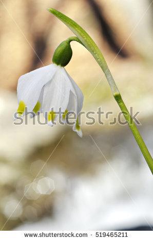 Asparagales Stock Photos, Royalty.