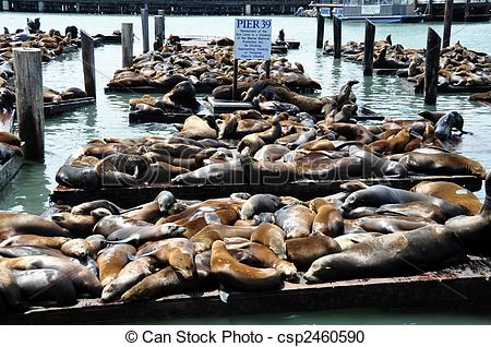 Stock Photography of Sea lions on pier 39 in San Francisco, USA.