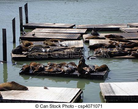 Stock Photography of Seals Hangout At Pier 39.
