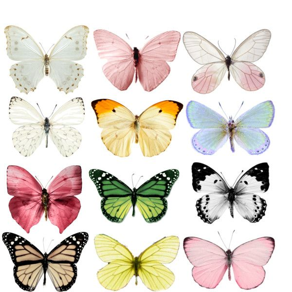 1000+ images about Butterfly images & Clipart 2 on Pinterest.