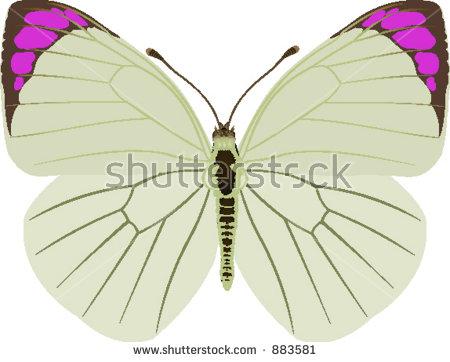 Clip Art Illustration Pink Butterfly Stock Illustration 41599966.