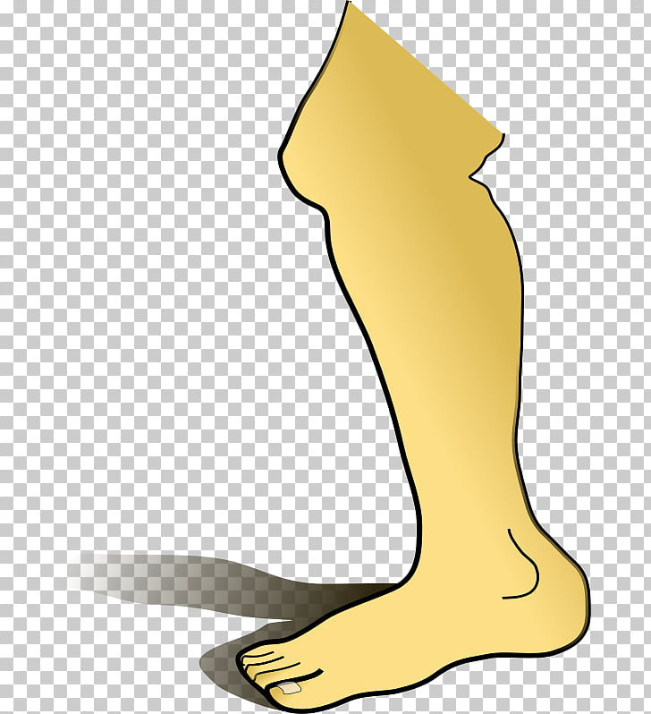 Pierna humana cuerpo humano, piernas PNG Clipart.