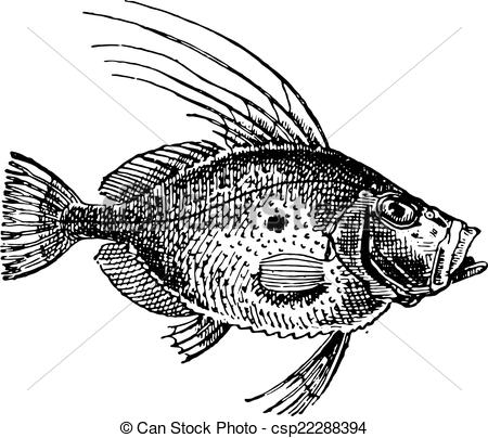 Dory Clip Art and Stock Illustrations. 23 Dory EPS illustrations.