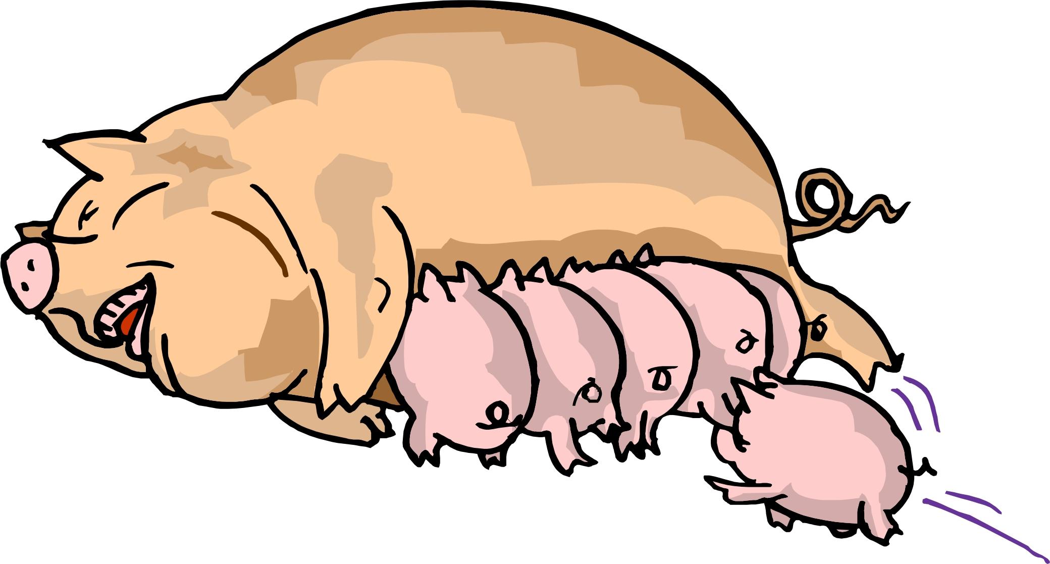 Free Piglets Cliparts, Download Free Clip Art, Free Clip Art.