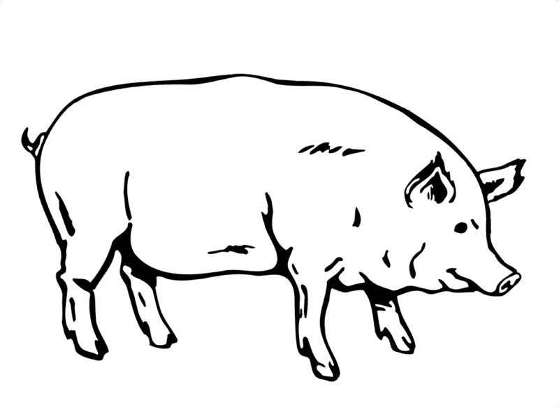 1 18 800×583 In Pig Clipart Black And White.
