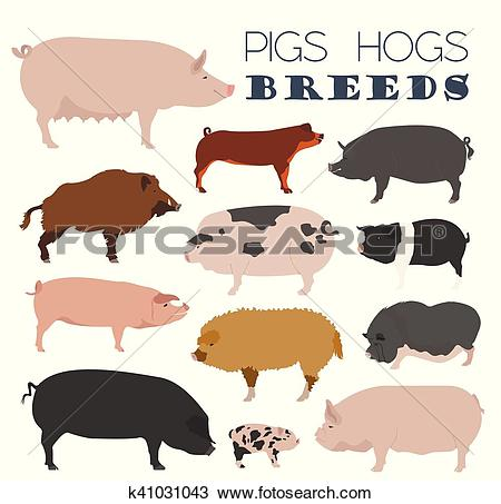 Clipart of Pigs, hogs breed icon set. Flat design k41031043.