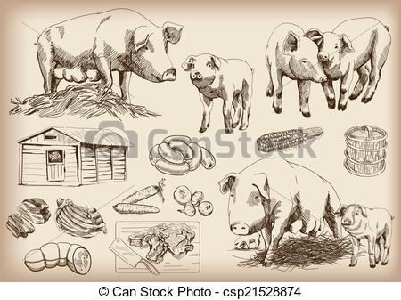 Vectors Illustration of pig.