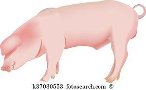 Pig breeding Clipart and Illustration. 192 pig breeding clip art.