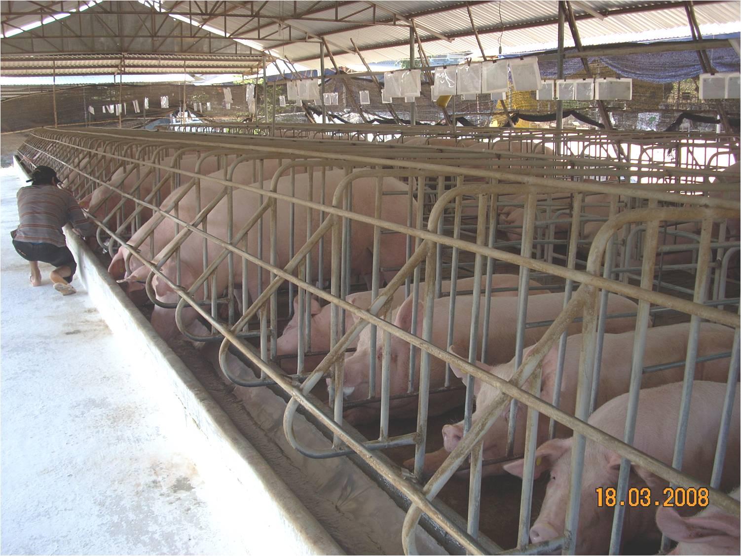 Pig Breeding Development Program.
