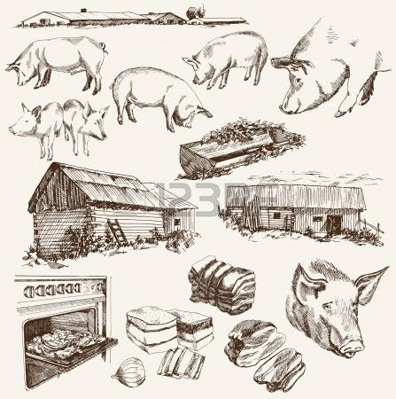281 Pig Breeding Stock Illustrations, Cliparts And Royalty Free.