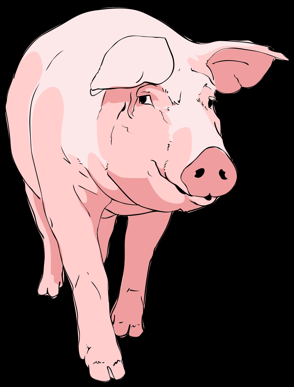 Farm pig clipart.