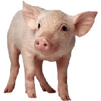 Download Pig Free PNG photo images and clipart.