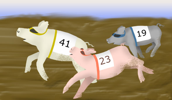 Pig Race Game Clipart.