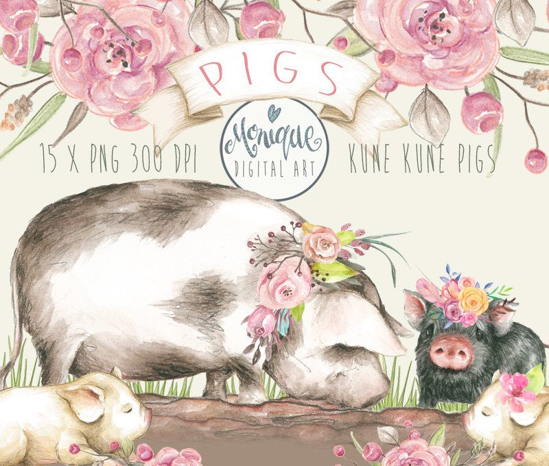 Pig Clipart,Pigs Watercolor,Cute Pigs,Kune Kune Pigs,hand.