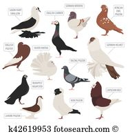 Nun pigeon Clipart Royalty Free. 12 nun pigeon clip art vector EPS.