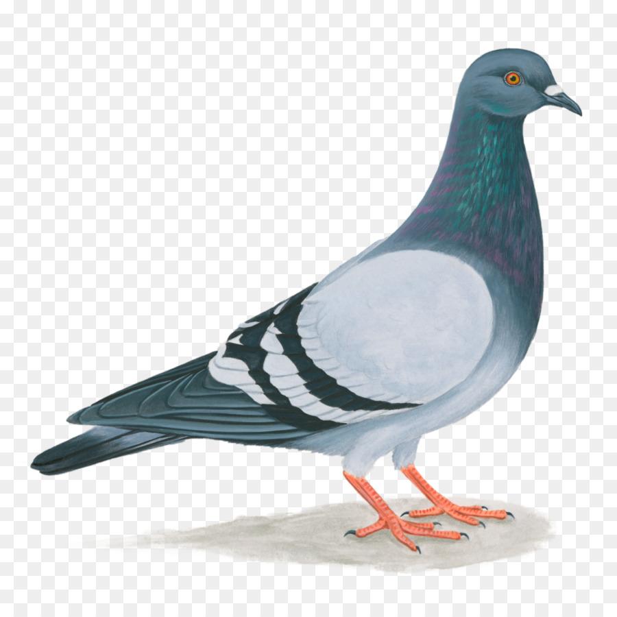 Dove Bird clipart.