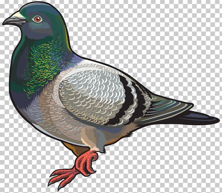 English Carrier Pigeon Columbidae Bird PNG, Clipart, Animals.