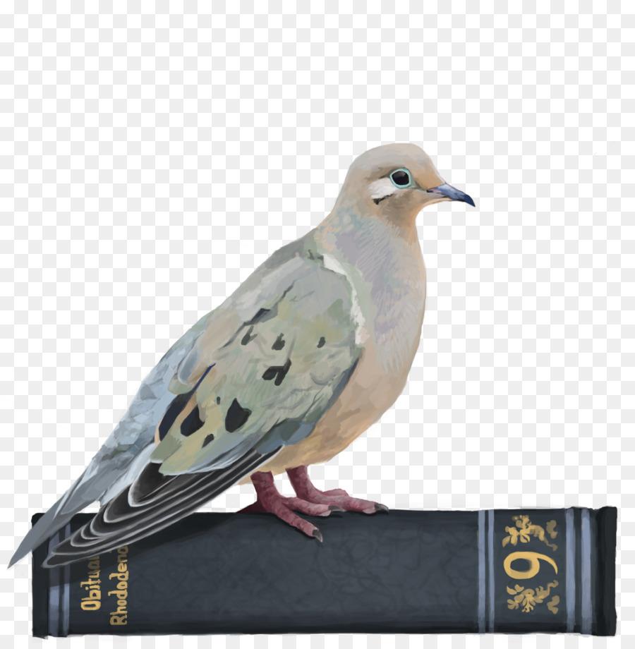 Dove Bird png download.