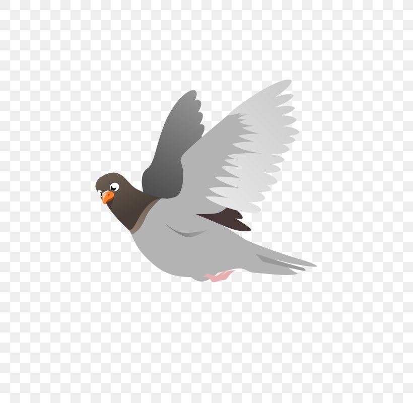 Domestic Pigeon Columbidae Flight Squab Clip Art, PNG.