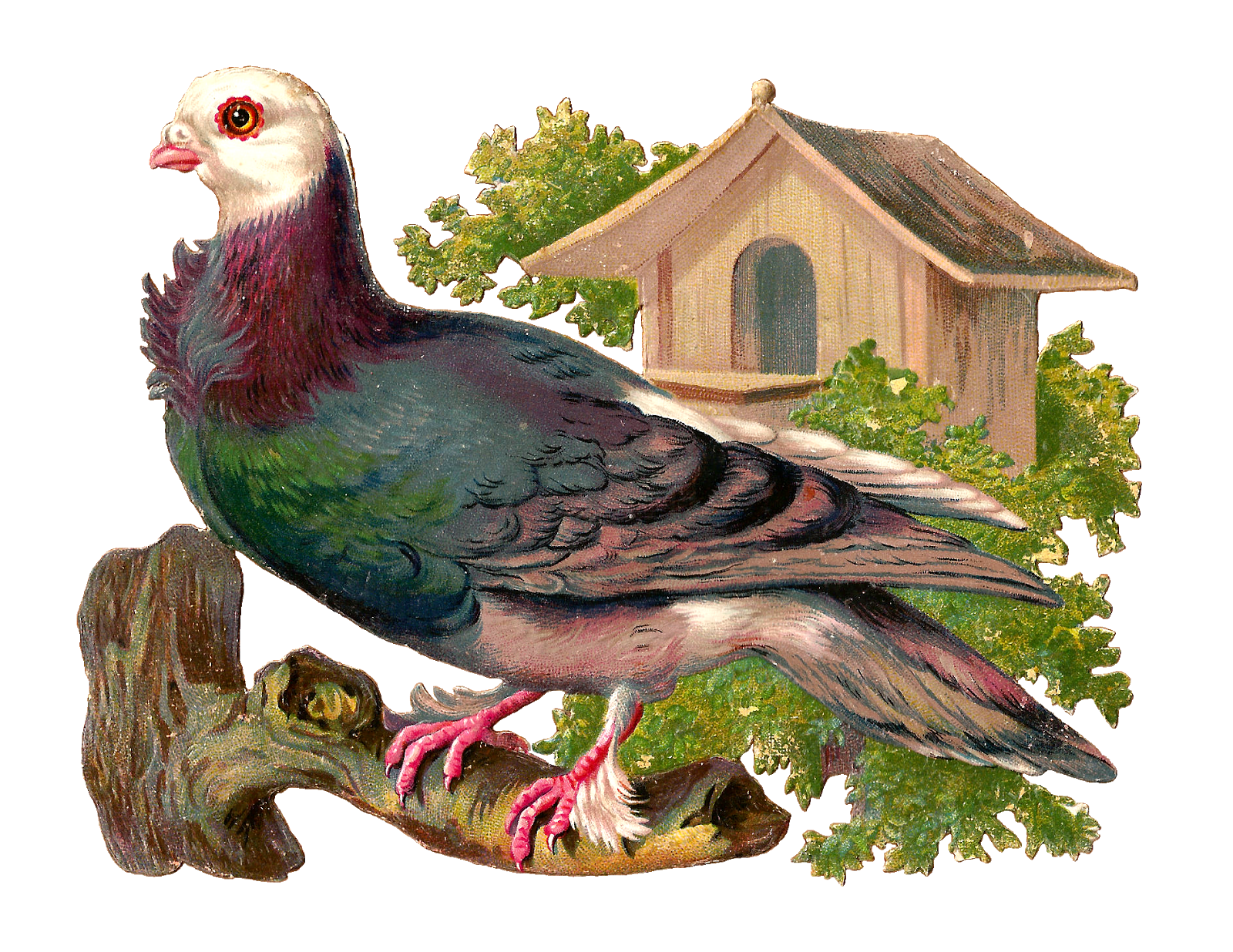 Antique Images: Free Pigeon Graphic: Victorian Scrap of Pigeon on.