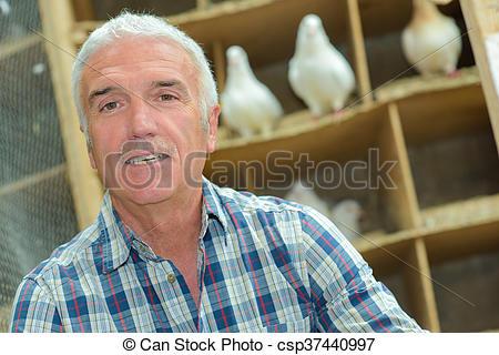 Stock Photographs of pigeon keeping csp37440997.