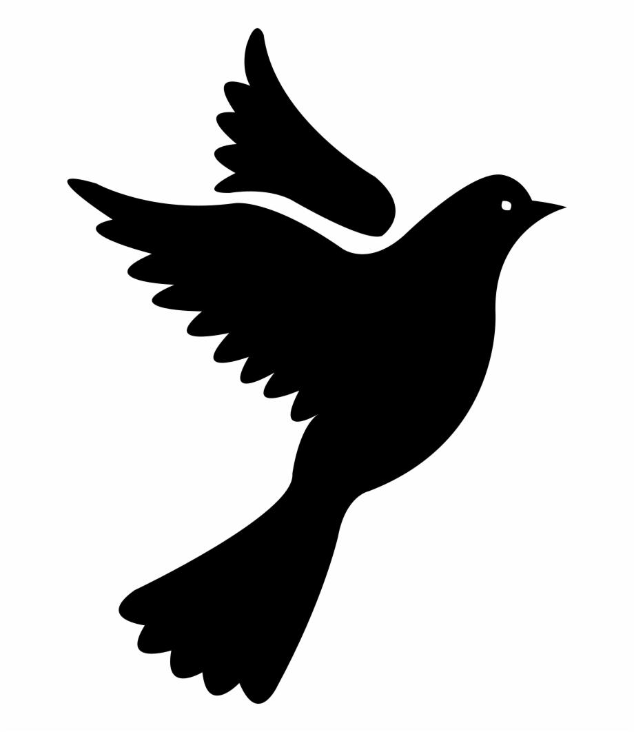 Download Pigeon Png Transparent Images Transparent.