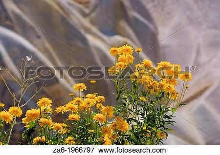 Picture of Marigolds. Pigeon Valley, Goreme. Cappadocia, Central.
