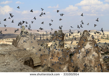 Pigeon Valley Stock Photos, Royalty.