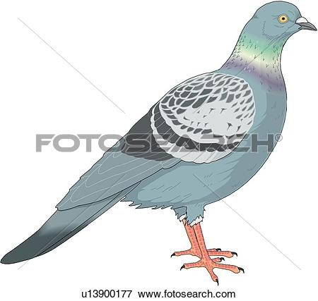Pigeon Clip Art Illustrations. 5,438 pigeon clipart EPS vector.
