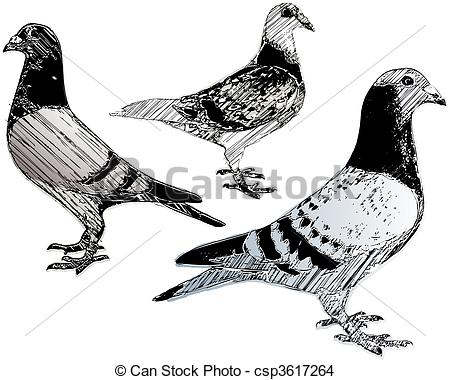 Pigeon Vector Clipart EPS Images. 5,819 Pigeon clip art vector.