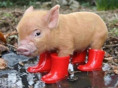 Piglet in a Puddle cute rain baby boots piglet little pig puddle.