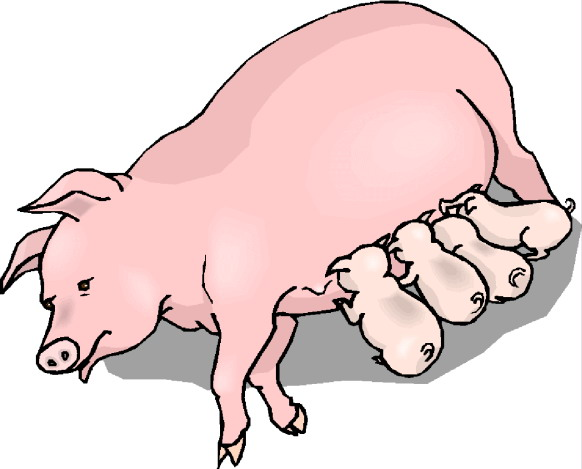 Clip Art Pig And Piglets Clipart.