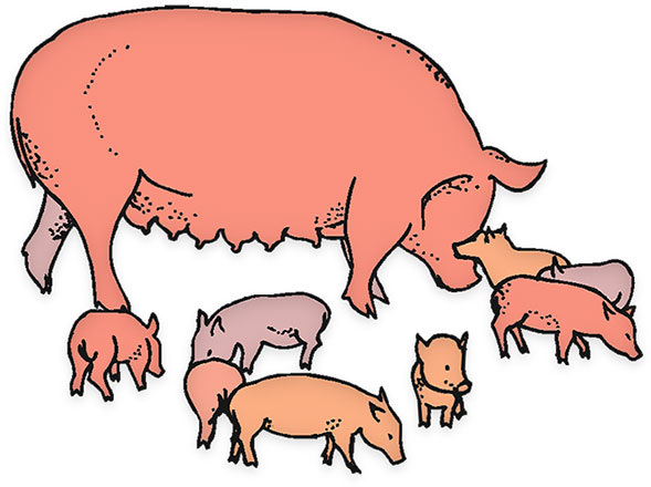 Pig and piglet clipart.